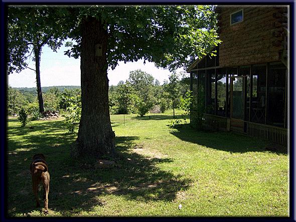 Boris-Side-Yard-Tree