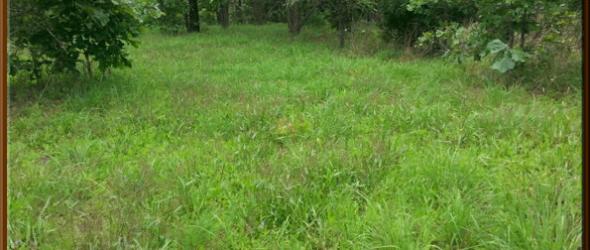 Green-Grass-Spring-2015